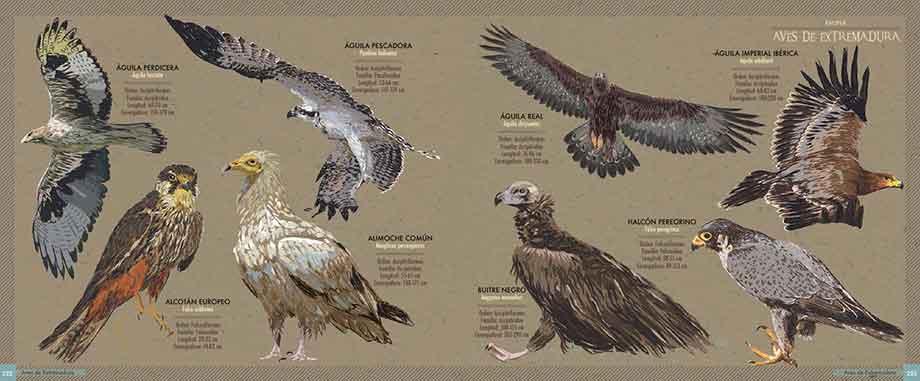 Atlas ilustrado de Extremadura_Extremeño Estudio