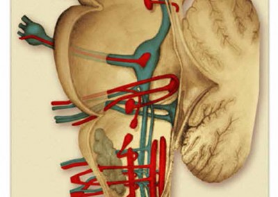 ilustración médica